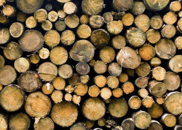 China to Put Import Restrictions on Australian Timber, Seafood